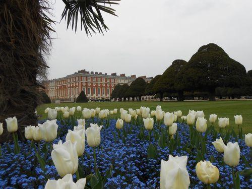 Des tulipes au pied d'un palmier (!?) et Hampton Court Palace au dernier plan
