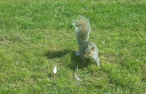 Et puis voici un écureuil parce que c'est trop mignon